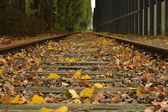 Of Wood and Steel (Robin Shepperson) Tags: tracks synthetic view length perspective bokeh nature autumn leaves manmade trees branches green orange yellow abandoned old unused past history time