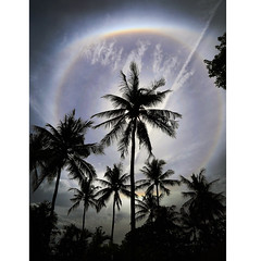 Sun halo (Robyn Hooz) Tags: sunhalo halo sun sole palme palms exagon refraction rifrazione thailandia thai