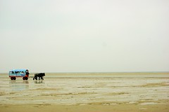 Dream (Eziah photography) Tags: horse carriage horizon winter schiermonnikoog netherlands island nature sand water beach sky clouds travel peace serenity dream trip hike