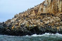 Sea Lions in Lima, Peru (` Toshio ') Tags: toshio lima callao peru palominoislands sealions island pacificocean pacific ocean sea southamerica fujixt2 xt2