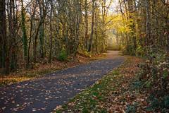 Morning light on the way back (briangeerlings) Tags: ezuiko38mmf35macro penft mintobrownislandpark salem oregon landscape tree forest path leaves light yellow green