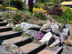 051017 218 (Vibeke Friis) Tags: 2005augdec 2006janfeb clairmontheigths mygarden flowers garden inmygarden onflickr path rockery