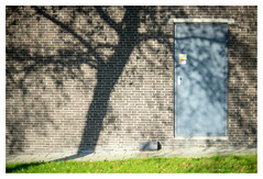Tree against the wall (leo.roos) Tags: shadow schaduw tree boom wall muur door deur brick herfst autumn fall golfplaat corrugatediron leves bladeren yellow geel a7 porstcolorreflexmcauto5514g porstcolor5514 m42 tomioka darosa leoroos