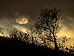 20181212-1516-57 lr (Don Oppedijk) Tags: bentveld noordholland nederland nl amsterdamsewaterleidingduinen awd cffaa moon