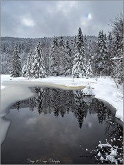 Pb_3088741 (calpha19) Tags: imagesvoyagesphotography adobephotoshoplightroom olympusfrance omd em1 zuiko ed1260swd lacdelispach lispach labresse vosges grandest hiver neige ngc flickr forêt lac lake mars 2016