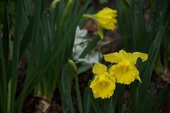 Blooming Flowers Fairhope (King Kong 911) Tags: bloomingflowersfairhope building clock downtown1 fairhope retail stores