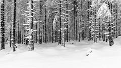 Winter in the Harz Mountains (Foto-Wandern.com) Tags: schnee deutschland winter jahreszeiten nationalparkharz wasser oberharz westharz natur harz germany lowersaxonia niedersachsen tourismus upperharz snow tourism fotokurs fotowanderncom fotowandern blackandwhite black white blackwhite