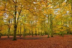 Bostall Woods (John A King) Tags: autumn colour bostal heath woods