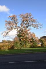 DSC_2240 (PeaTJay) Tags: nikond750 reading lowerearley berkshire gardens outdoors flora fauna plants flowers trees bushes
