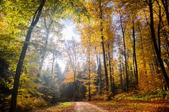 (2D110) Tags: 2470mm nikond750 lumière nature automne feuille forêt