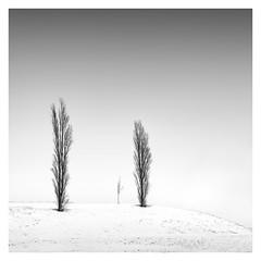 Winter - The family (Marco Maljaars) Tags: marcomaljaars minimalism minimal mood empty snow winter cold monochrome blackandwhite bw fineart landscape ice old tree trees winterscape family fence