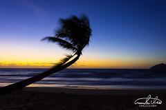 Sunrise - Mission Beach (Theo Crazzolara) Tags: beach missionbeach australia queensland palm tree palmtree natural sunrise sunset nature landscape scenic scenery beautiful paradise holiday vacation tropic tropical coast longexposure ocean water