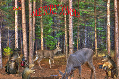 Happy Holidays (fishmonger45) Tags: photoshop photomatix deer dillos hdraddicted hdr hdrphotomatix hss greatphotographers