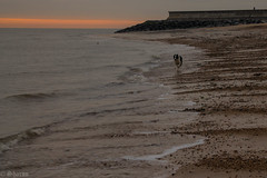 Beach Runner (sharongellyroo) Tags: dodge bordercollie rescue seaside essex frintononsea beach northsea winter walkies