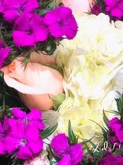 "Bouquet (EDWW (day_dae) Esteemedhelga) Tags: garden nature season flower splants bloom botany nursery parks blossom perennial annual bud cluster floret efflorescence seedling biennial greenery bouquet posy rosette natura mothernature greatmotherdamenature"" vegetation horticulture flora botanical juncture natural beauty creation siring passion sprout esteemedhelga edww daydae"