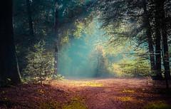 It takes darkness to be aware of the light (Ingeborg Ruyken) Tags: shertogenbosch autumn october woods berlicum fall flickr herfst ochtend morning wamberg tree forest oktober natuurfotografie 500pxs instagram 2018 bos