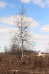 Tree (historygradguy (jobhunting)) Tags: easton ny newyork upstate washingtoncounty tree field