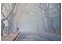 * (PattyK.) Tags: ioannina giannena giannina epirus ipiros greece grecia griechenland hellas ellada november autumn bythelake lakeside lakefront mist fog novembermorning trees europe balkans europeanunion nikond3100 snapseed ιωάννινα γιάννενα γιάννινα ήπειροσ ελλάδα βαλκάνια ευρώπη ομίχλη νοέμβριοσ δρόμοσ δέντρα μώλοσ δίπλαστηλίμνη