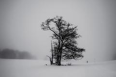 White solitude (PaxaMik) Tags: winter winterlandscape solitude lonelyness alone snow neige arbredhiver tree wintertree black blackandwhitephotos silhouette contraste white blancheur france plateauderetord