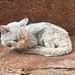 Scruffy cat near Bahir Dar, Ethiopia