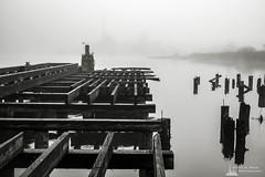 Old Wharf on the Willapa No. 8, Raymond, Washington, 2018 (Steve G. Bisig) Tags: thatpnwlife visitpnw bestofthenorthwest blackandwhite blackandwhitephotography blackandwhitephoto bnw bnwaddicted bnwcaptures bnwcreatives bnwlife bnwmagazine bnwofourworld bnwplanet bnwphotography cascadia cascadiaexplored dock explorewashington fog foggy justgoshoot landscape landscapephotography livewashington nikon nikonnofilter nikonz7 northamerica northwest outdoorphotography outdoors pacificcounty pacificnorthwest pilings pnwbnw pnwdiscovered pnwexplored pnwisbeautiful pnwisbest pnwlife pnwwonderland raymond sonorthwest thenwadventure unitedstates upperleft upperleftusa usa wanderwashington washington washingtonstate washingtonexplored water wharf z7