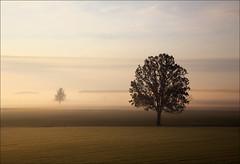 due (claudiomantova1) Tags: alba paesaggio landscape alberi due
