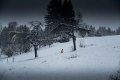 DSC_0006 (Patrick.Raymond (5M views)) Tags: mont montagne alpes hautesavoie megève combloux neige hiver gel froid nikon