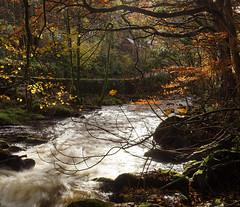 Rockford Autumn (EmPhoto.) Tags: rockford exmoor autumn landscapepassion emmiejgee uk sonya7r eastlynriver