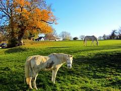 Hallo, Saturday!! (daniel_evogt) Tags: horse aachen streetphotography travelphotography germany laurensberg november 2018