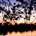 soft sunset silhouette