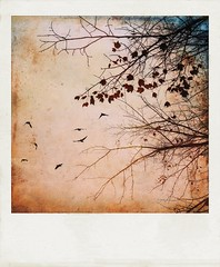 Another rainy day in autumn. (jeanne.marie.) Tags: pink golden november textured polaroid branches leaves tree mydailywalk iphone7plus iphoneography flight flying birds rainy autumn 100xthe2018edition 100x2018 image97100