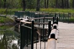 Inglewood Bird Sanctuary, Calgary (R-Gasman) Tags: travel inglewoodbirdsanctuary calgary alberta canada