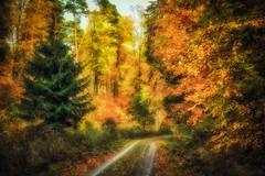 The Guardian (Claudia G. Kukulka) Tags: tree baum trees bäume fall autumn herbs foliage laub forest woods wald irtenbergerwald gutenbergerwald path way road weg pond teich painterly