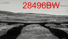 robfrance5d2_28496bw_280918_ribblehead_viaduct_inf+_edr16lr6sefxpropse15coefx4weblowres (RF_1) Tags: 2018 britain british dales england rail railroad rails railway railwayviaduct railways ribblehead ribbleheadviaduct rural sc settlecarlisle shadow shadows transport uk unitedkingdom viaduct yorkshire