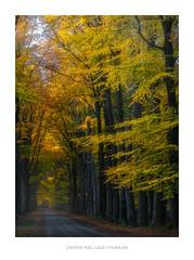 Lage Vuursche, autumn (http://www.paradoxdesign.nl) Tags: lage vuursche utrecht gooi hilversum herfst herbst autumn automne bos forest wood lane road trees yellow orange late sunset