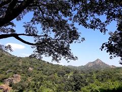 Mt Abu-02 (Arnab1973) Tags: india rajasthan sky mountain hill forest wilderness mtabu green