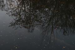 Upside-down (Binacat) Tags: canon eos 750d berlin tiergarten outside nature leaves landwehrkanal water reflection trees color natur herbst autumn blätter wasser spiegelung sky himmel wolken clouds dawn dämmerung