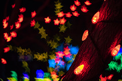 Up the Bark (noname_clark) Tags: night dark light christmas gardensonspringcreek bokeh tree star