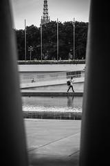walking (Tito Rollis) Tags: street sony a6000 bw blackandwhite people mono flickr absoluteblackandwhite