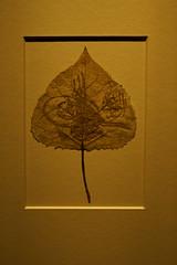 The leaf (ivoräber) Tags: mia qatar museum