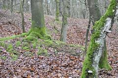 Ugly (Arne Kuilman) Tags: d700 harfsen zutphen wandelen uit vakantie netherlands nederland kootwijk 70200f4 moss mos bos wandeling