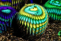 Electric Desert (joeksuey) Tags: electricdesert desertbotanicalgarden lights color klipcollective phoenix arizona joeksuey display cactisynesthesia cacti saguaros goldenbarrel infinity crystal rocks