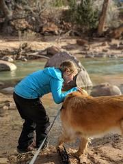 00100lPORTRAIT_00100_BURST20181228151249826_COVER (KevinXHan) Tags: zions national park dog golden retriever cute aww parus trail hike walk nature outdoors google pixel3 photoblog photodiary