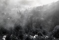 Foggy forrest (Creativespirit13) Tags: winter snow blackandwhite snowlandscape trees balkan mountains fog foggylandscape foggyforrest mystique bulgaria staraplanina balkanmountains