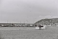 Ritorno del peschereccio. Canon 3000V + Ilford Delta 100. (paolapaoletta) Tags: canoneos3000v delta100 biancoenero blackandwhite sea mare boats barche pesca fishing film liguria italy