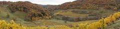 L'Automne dans les vignes... (passionpapillon) Tags: paysage forêt vigne automne panorama landscape ain france poncieux rhônealpesauvergne passionpapillon 2018