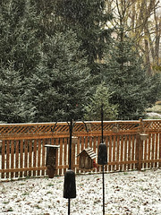 first sign of Winter (karma (Karen)) Tags: baltimore maryland home backyard snow birdfeeders trees spruces fences hff cmwd