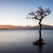 Milarrochy Bay (dalejckelly) Tags: canon canon5dmarkiv canon2470f4lis lochlomond milarrochybay tree longexposure sunset goldenhour scotland scottish scenery scenic trossachs autumn landscape landscapephotography outdoor mountain hills