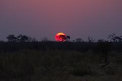 Sunset (Claudio e Lucia Images around the world) Tags: sunset savute savuti botswana pentax pentaxk5 pentaxlens pentaxart pentax55300