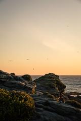 Landscape (Sebastiandx) Tags: nikon landscape d3200 sunset beach ocean waves sky moments happy freedom